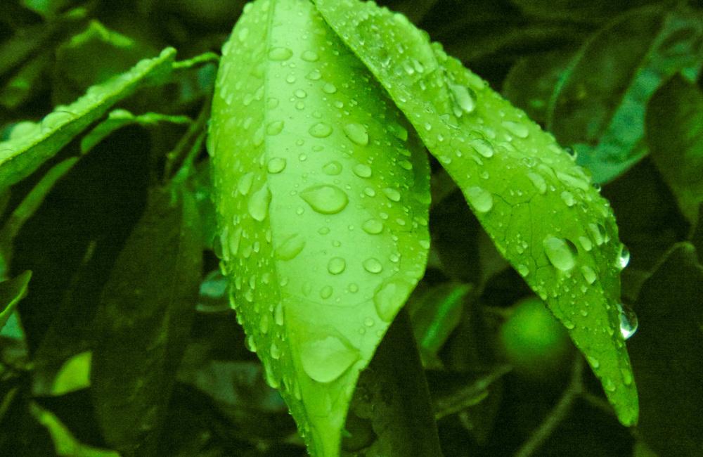 Gotas de lluvia 1 - 6