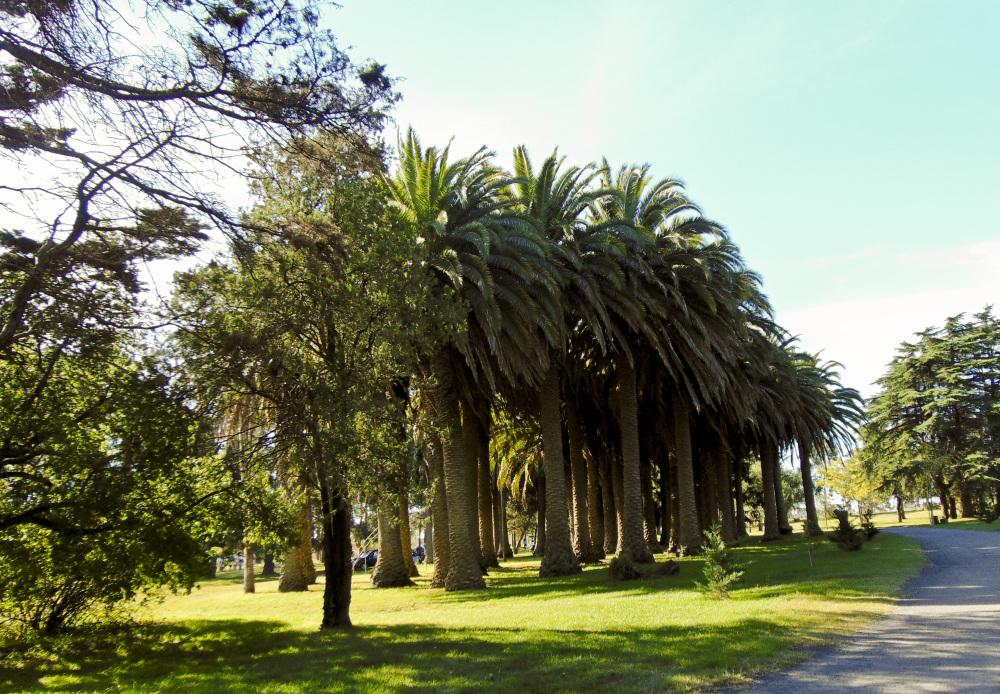 Parque Angel L. Cabañas 11 - 12