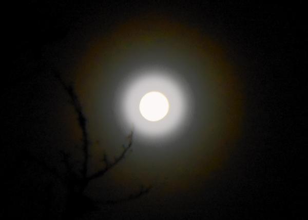 Luz de luna 1 - 2