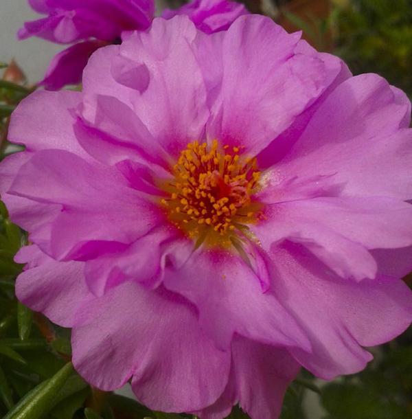 Flores de primavera 1 - 3
