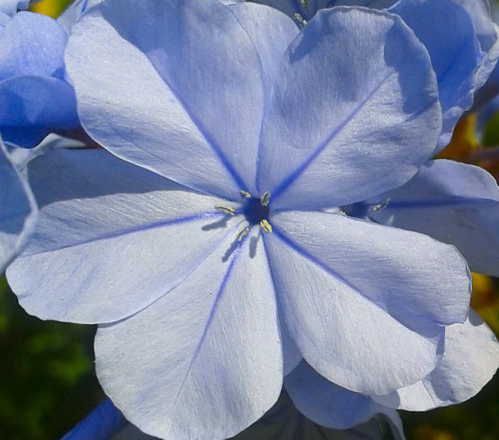 Flores de primavera 2 - 3