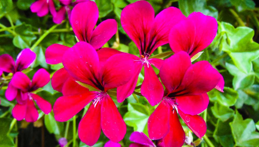 Flores de primavera 1 - 4