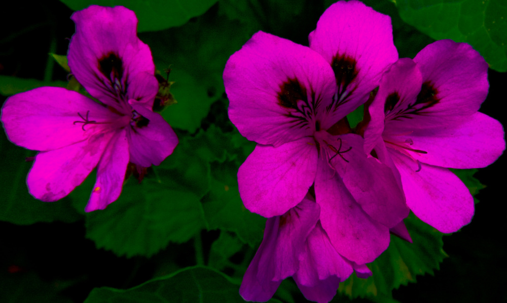 Flores de primavera 3 - 4