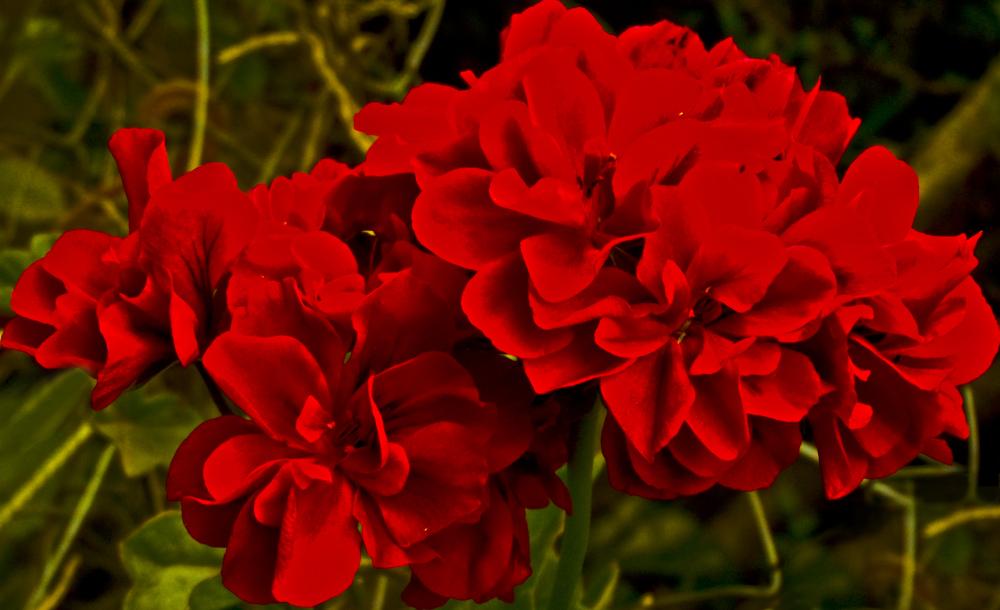 Flores de primavera 4 - 4