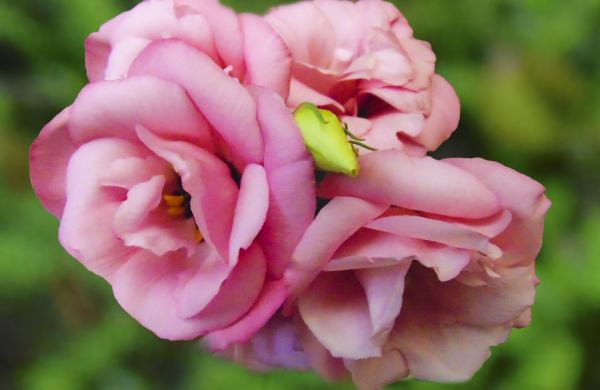 Las flores de mi jardín 1 - 5