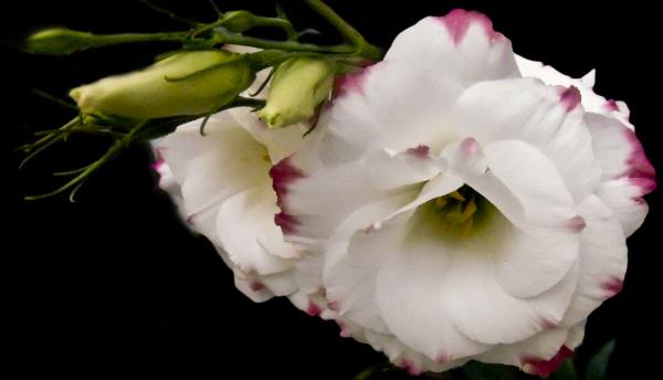 Las flores de mi jardín 3 - 5