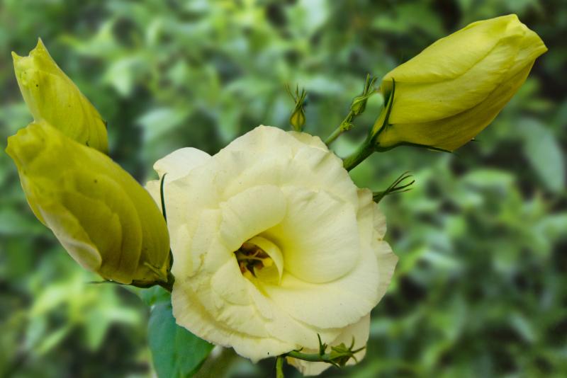 Las flores de mi jardín 5 - 5