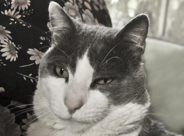 Mi gatito Chichilo