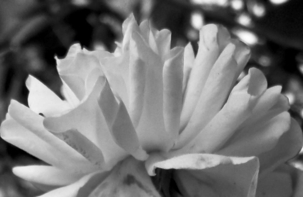 Flores 2 - 4