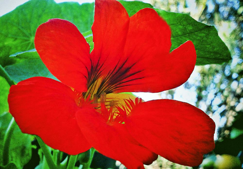 Flores 4 - 4