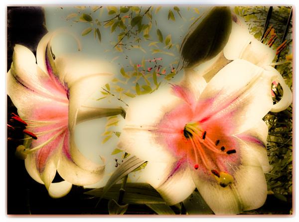 Flores 2 - 5