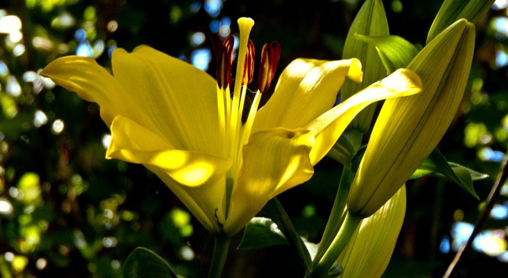 Flores 4 - 5
