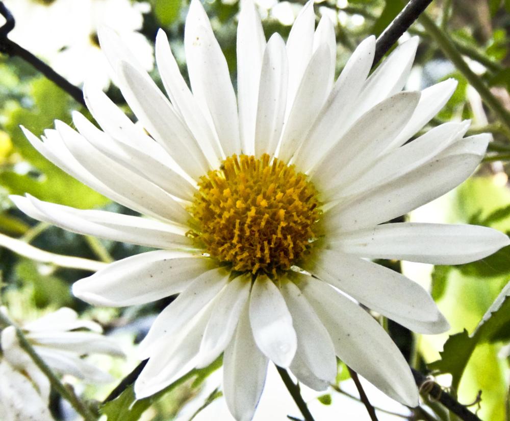 Flores 1 - 2