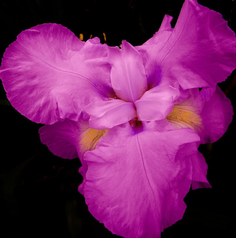 Flores 2 - 2