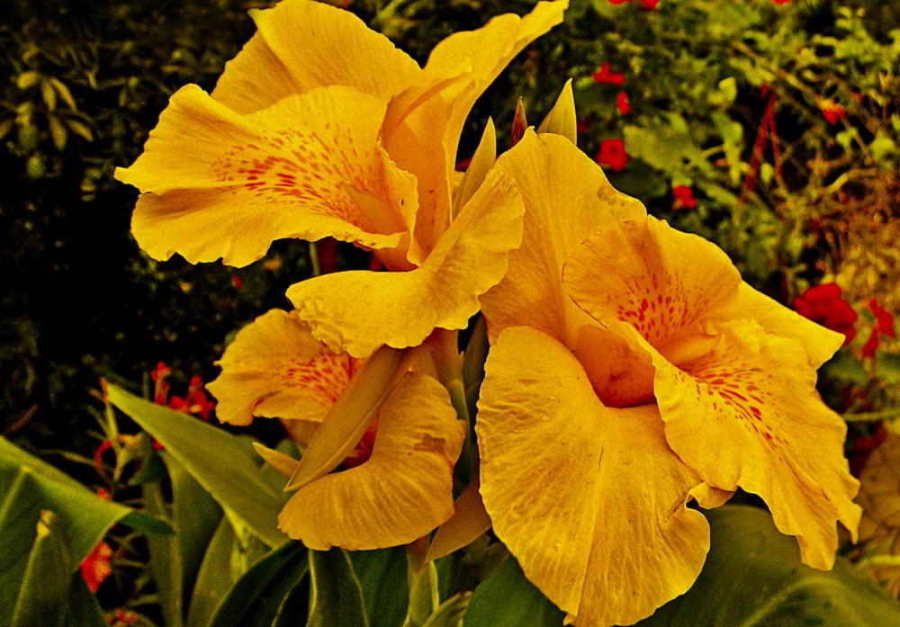 Flores de agosto 1 - 5
