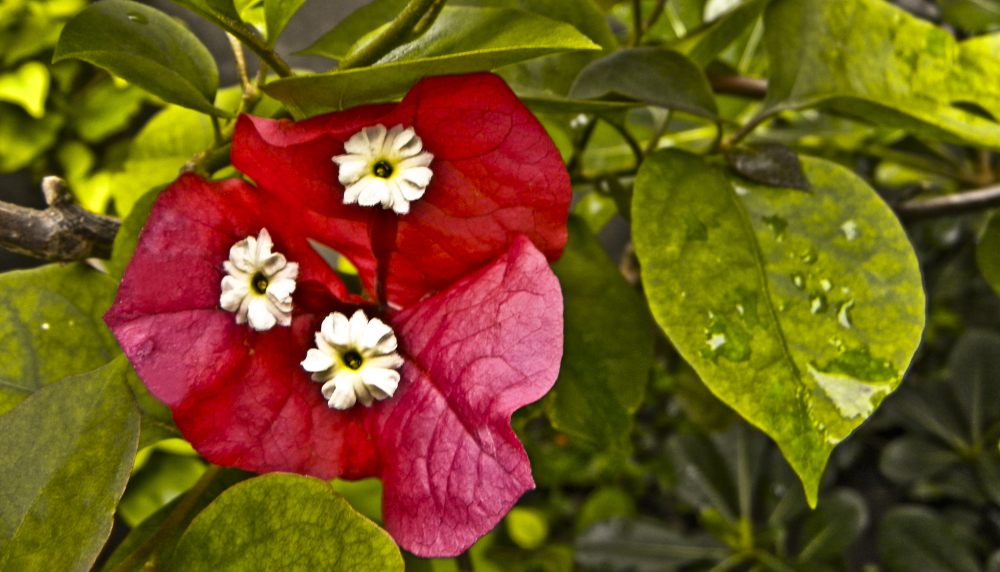Flores de agosto 2 - 5