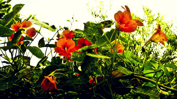 Flores de agosto 3 - 5