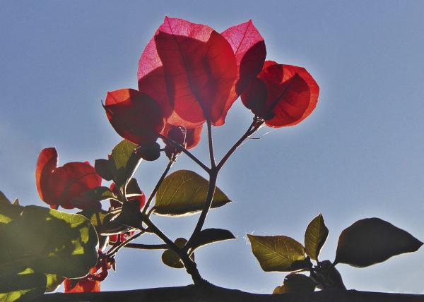 Flores 1 - 8