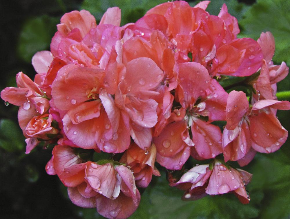 Flores 2 - 8