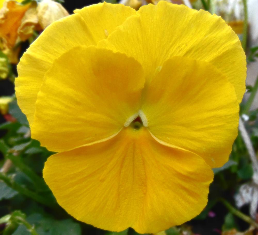Flores 3 - 8
