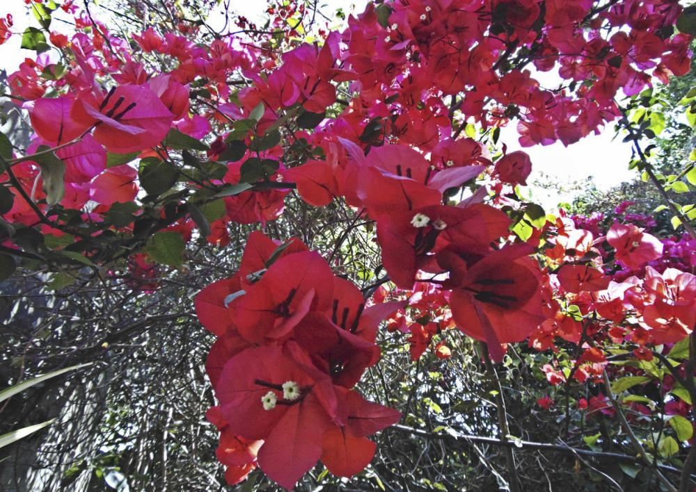 Flores 4 - 8