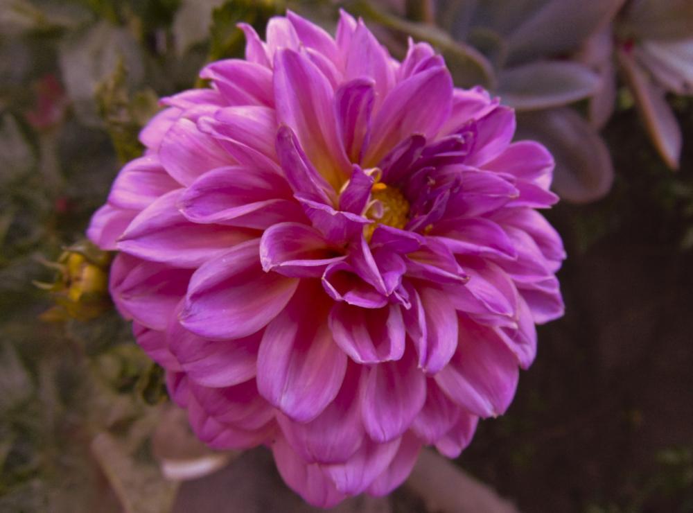 Flores 6 - 8