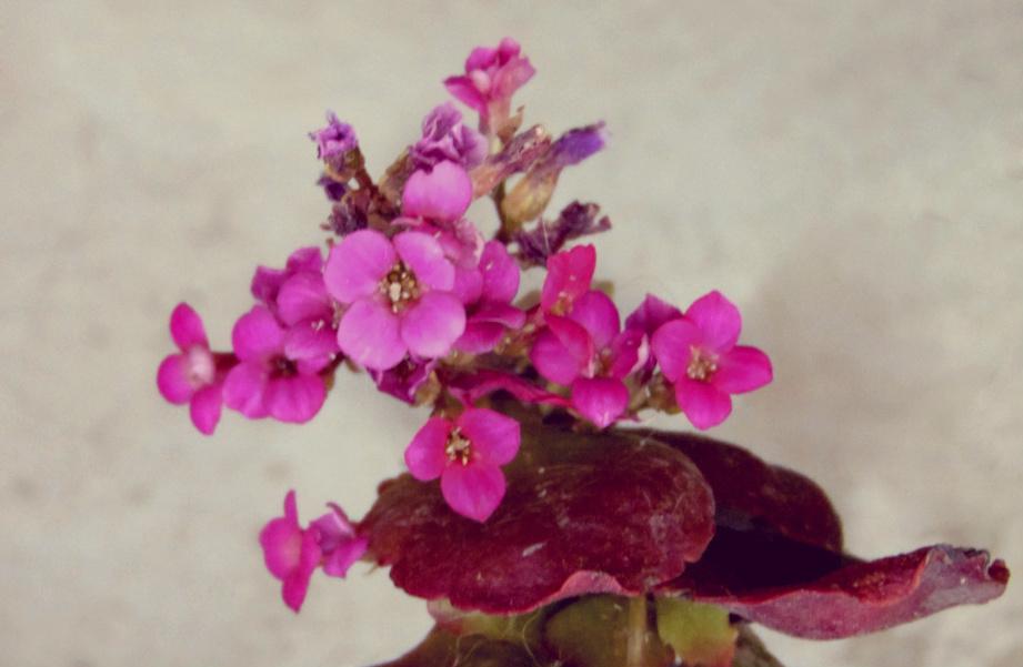 Flores 7 - 8