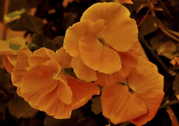 Flores 8 - 8