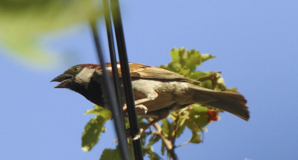 Pájaros 1 - 4