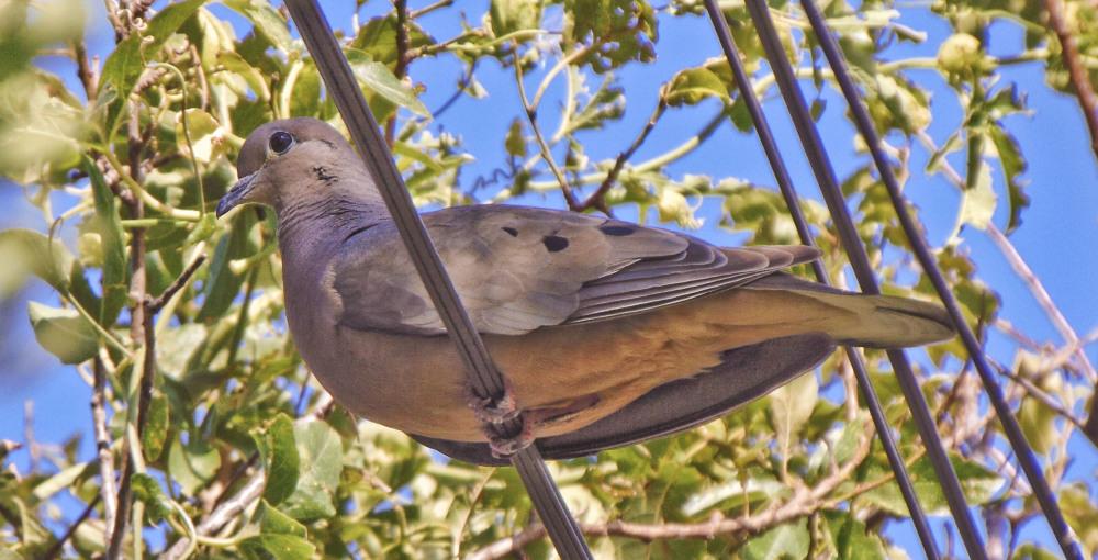 Pájaros 3 - 4