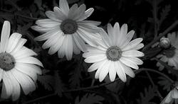 Flores 2   3