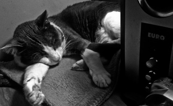 Chichilo se duerme con música