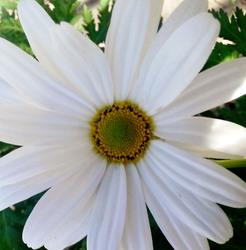 Flores 1   3
