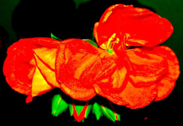 Las flores de mi jardín 1 - 12