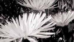 Las flores de mi jardín 4   12