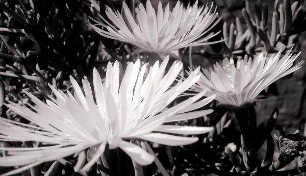 Las flores de mi jardín 4 - 12