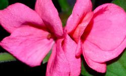 Las flores de mi jardín 3   12