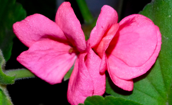 Las flores de mi jardín 3 - 12