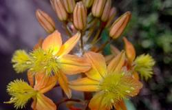 Las flores de mi jardín 2   12