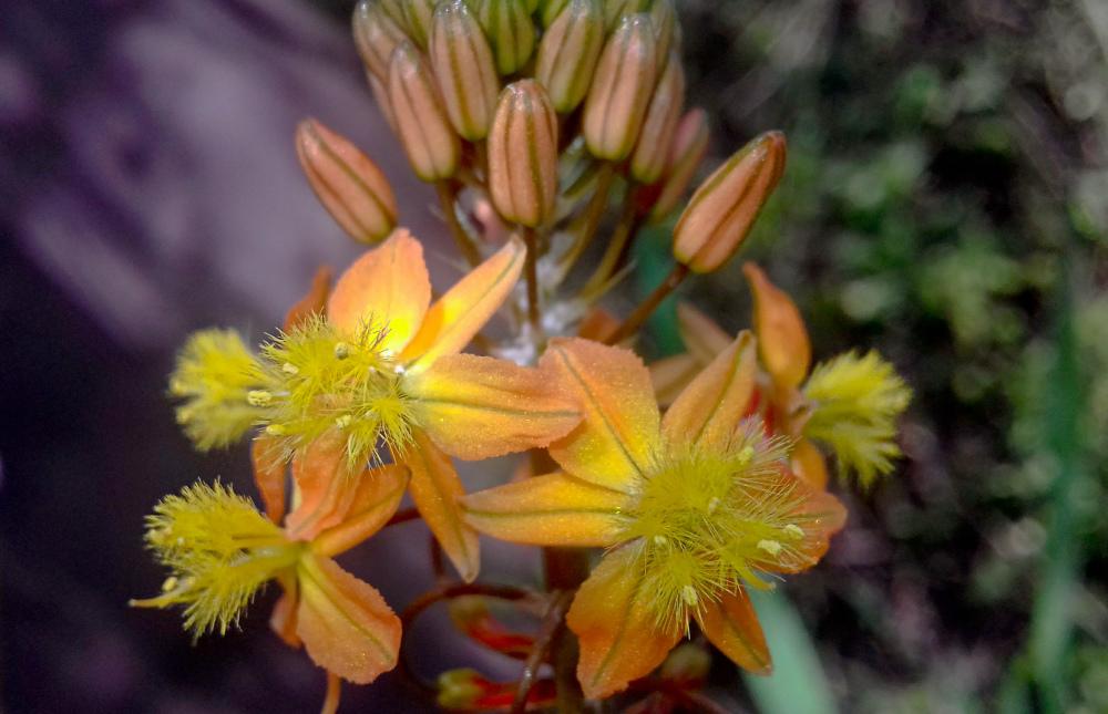 Las flores de mi jardín 2 - 12