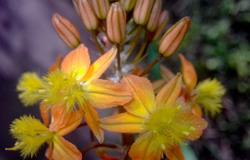 Las flores de mi jardín 2   6