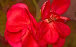 Las flores de mi jardín 5   12