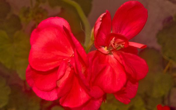 Las flores de mi jardín 5 - 12