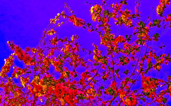 Las flores de mi jardín 6 - 12