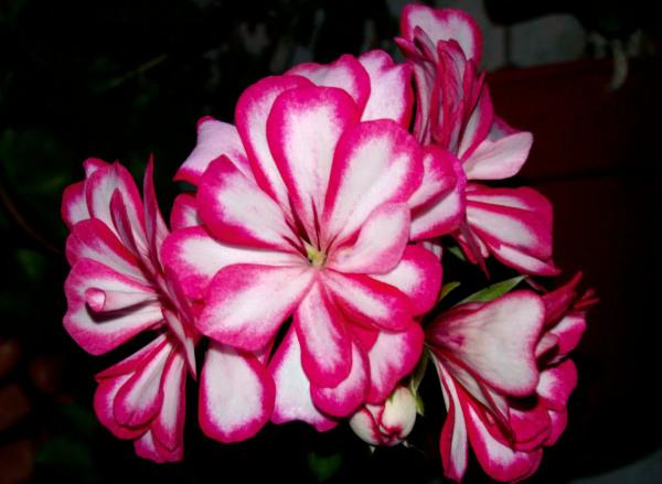 Las flores de mi jardín 8 - 12