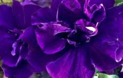 Las flores de mi jardín 9   12