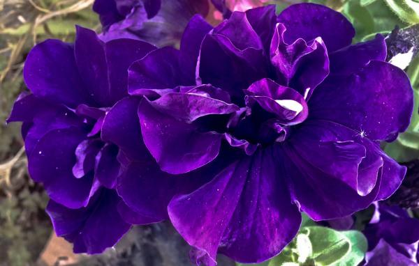 Las flores de mi jardín 9 - 12
