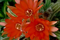 Las flores de mi jardín 11   12
