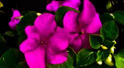 Las flores de mi jardín 12   12