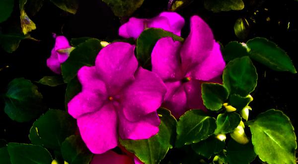 Las flores de mi jardín 12 - 12